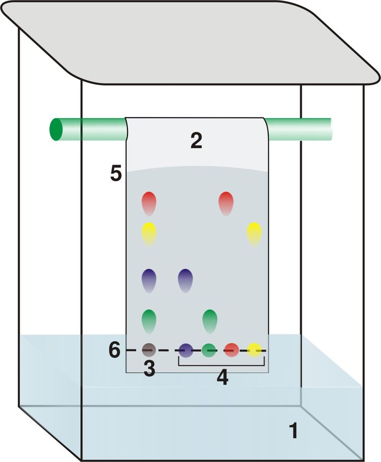 In thin layer chromatography (TLC), the mixture is dotted on a silica gel plate (the solid phase. The end of the plate is placed in a jar of solvent (the moving phase), and capillary action slowly carries the solvent up the plate. As the solvent moves, it encounters the mixture and moves particles from the mixture up the silica plate. The distance the particles moves depends on their polarity. This is a quick and cheap way to tell if a chemical is pure, or how many components are in a mixture. [4]