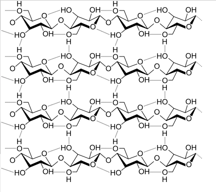A small change in the structure of the glucose chains--beta linkages--completely changes their function.