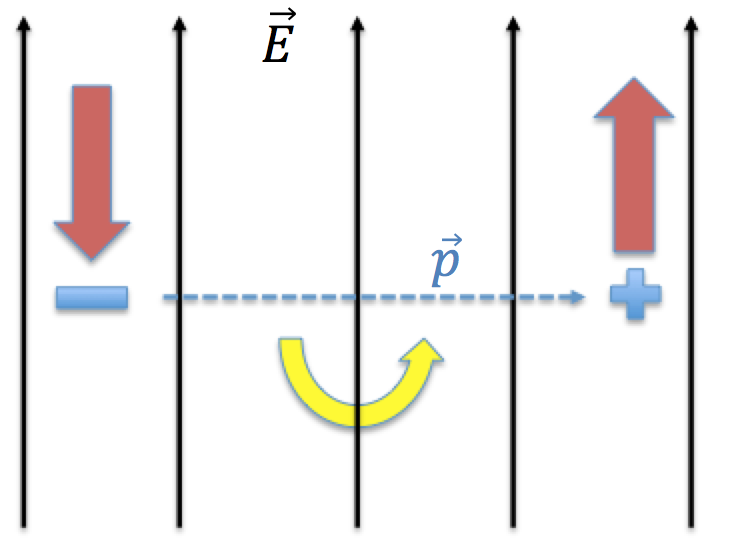 The black external electric field causes red forces in opposite directions on the charges, resulting in rotation of the blue dipole moment in the direction indicated by the yellow arrow.