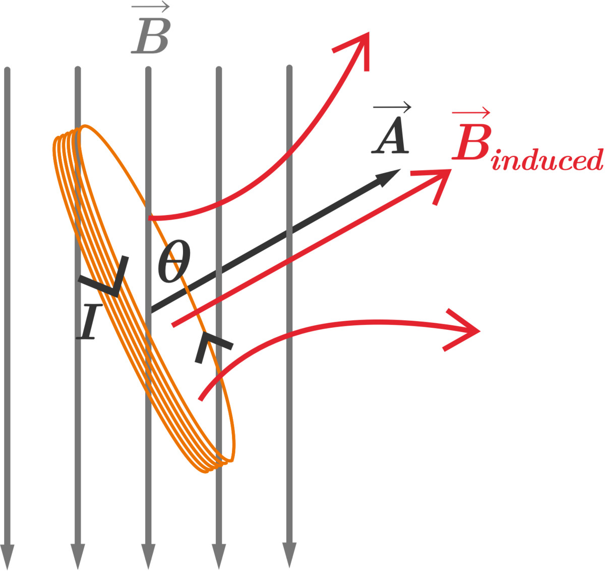 As the coil tilts, the area vector \(\vec{A}\) is no longer perpendicular to the applied magnetic field \(\vec{B}\), so the magnetic flux of the applied field increases. This induces an emf and thus a current in the coil which results in an induced magnetic field opposing the applied field.