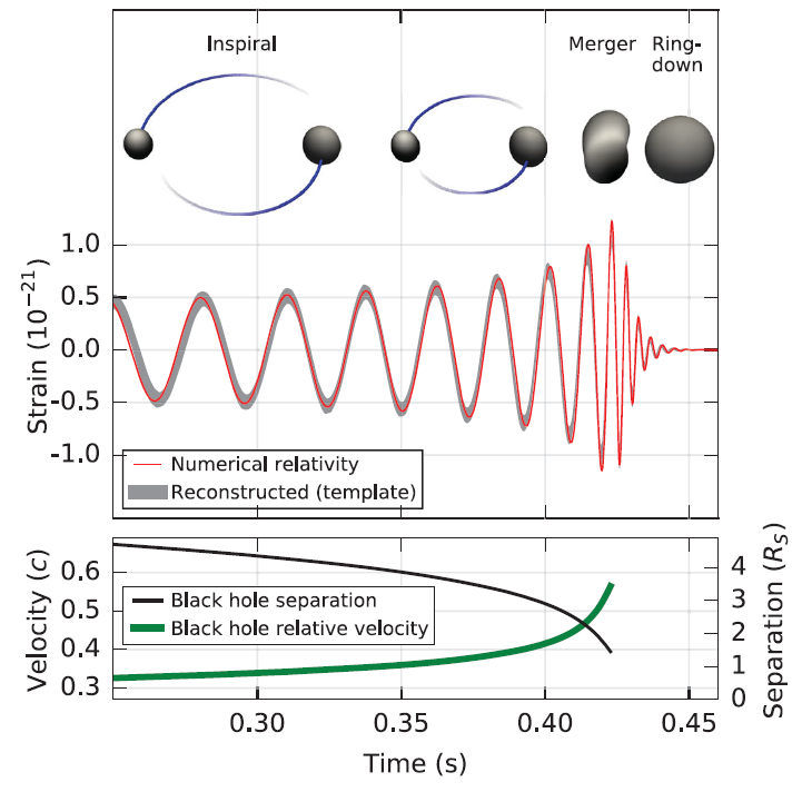 As the black hole separation decreases, the black holes rotate rapidly around each other, releasing gravitational waves towards the detector in a large burst [5].