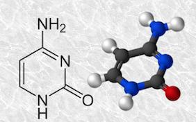 cytosine [1]