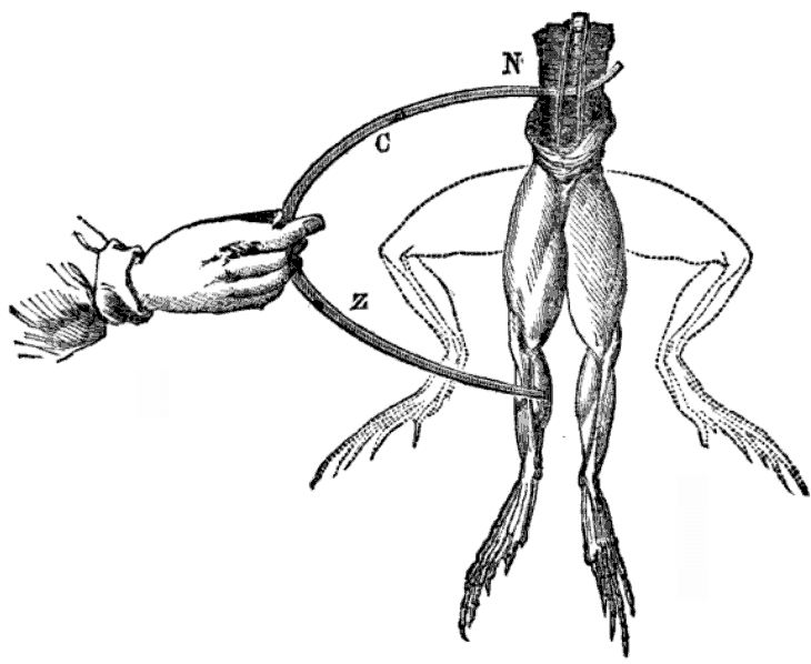 An illustration of Galvani's experiment. [1]
