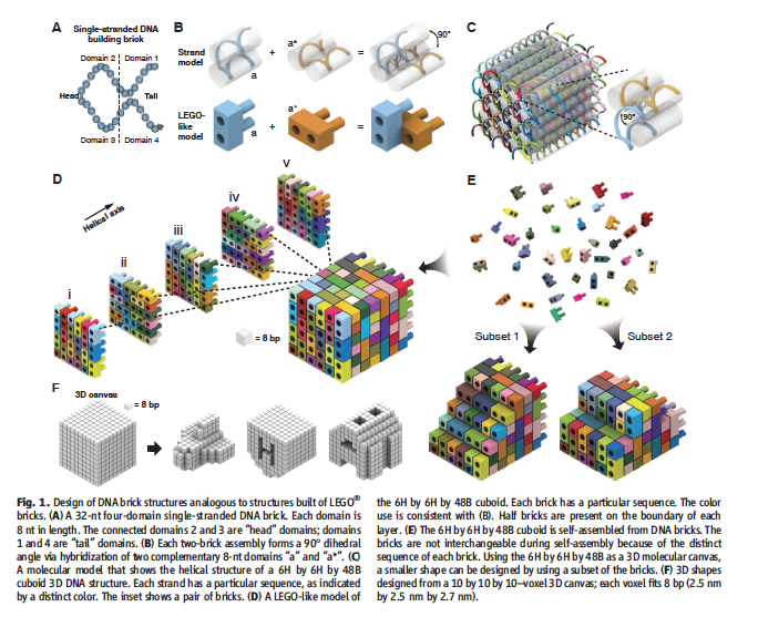 Schematic from the original journal article showing how the DNA Bricks are analagous to legos. [1]