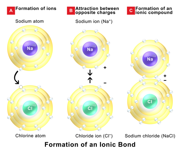 Ion interactions form the strong bonds that hold ionic solids together.