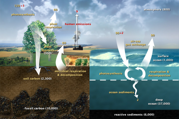 The Carbon Cycle [2]
