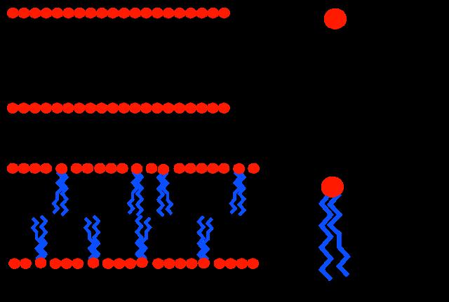 Public Domain Image